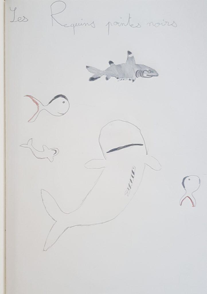 Dessin des requins pointes noires